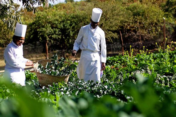 vegetable-garden5A7193D8-7B91-272B-8797-F67E19651944.jpg